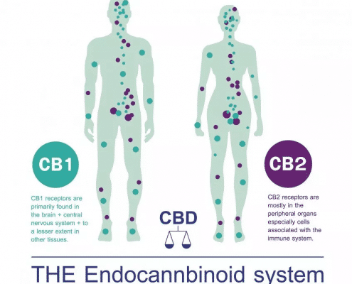 Endocannabinoid System and RLV Hemp